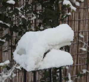 kikker sneeuw